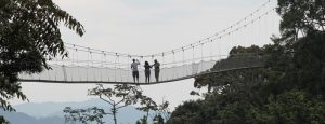 canopy-walk-nyungwe